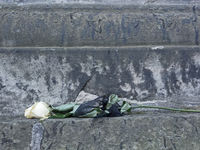 Welke weiße Rosenblüte als Symbol für Trauer