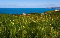 Blumenfeld - Tintagel - Cornwall