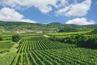 Weinort Oberbergen bei Vogtsburg,Kaiserstuhl,Schwarzwald,Baden-Wuerttemberg,Deutschland