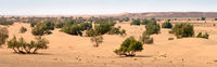 Sand dunes and trees in Sahara desert