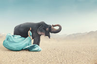 Fashion outdoor fantasy portrait of young woman in beautiful long dress posing next to elephant