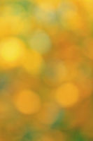 green, yellow, orange bokeh blurred background