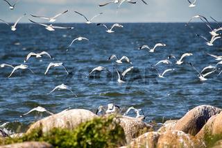Seagulls over sea