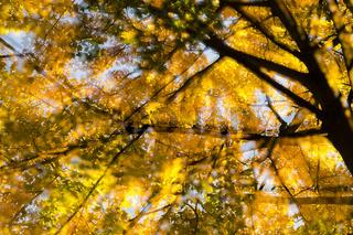 Herbst, autumn