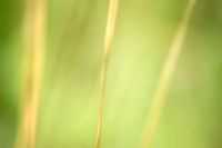 Getreidegrannen Makro