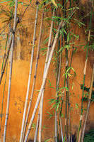 Abstract photo of bamboo plant in front of old house wall