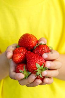 Erdbeeren Früchte Beeren Erdbeere Frucht Beere Sommer halten Hände Kind kleiner Junge Hochformat