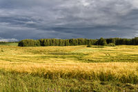 landscape in Masuria
