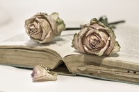 Zwei vertrocknete Rosen auf altem Buch