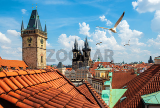Birds over Old Town Square