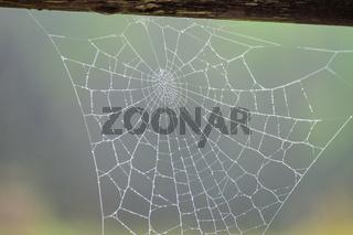 Spiderweb Garmisch-Partenkirchen in autumn