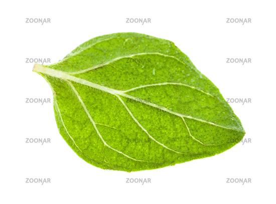 single leaf of Oregano herb isolated on white
