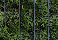 Thuja leaves and bars background