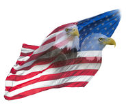 Double exposure  of  bald eagles on american flag.