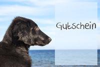 Dog At Ocean, Gutschein Means Voucher