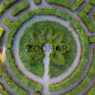 Round form of a labyrinth of sheared bushes, top view from the drone. Topiary art.