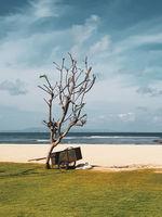Wheelbarrow on the beach