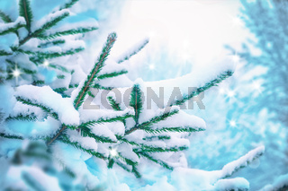 Beautiful fir tree covered snow, closeup. Winter Christmas scenic greeting card background, copy space. Holiday landscape, spruce branches, falling snowflakes. Nature outdoors. Soft blue toned