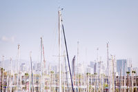 masts of sailing yachts as a timber