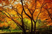 Autumn trees vibrant with colour
