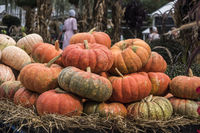 Pumpkins market for Thanksgiving day and Halloween