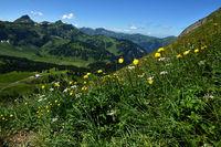 Bregenzerwald; Blick von der Kanisfluh zur Damuelser Mittagsspitze; Trollblumen im Vordergrund