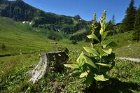 Kanisalpe im Bregenzerwald bei Mellau