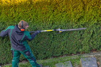 Gardener cuts a hedge
