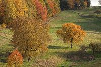 Odenwald Landschaft im Herbst