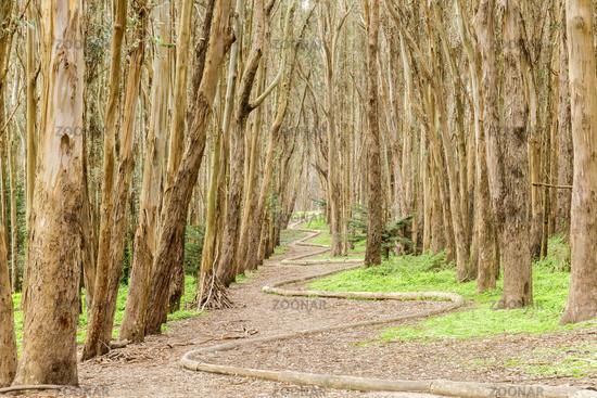 Eucalyptus Grove Wood Line on a winter day.