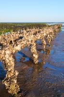 Ile de Ré oyster banks in the sea