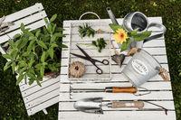 Kräuter im Garten mit einer Gießkanne uns Schere von oben weiß