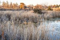 fall scenery of wetlands