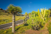 Mountain winding road through the La Gomera