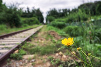 yellow daisy flower in abandoned railroad