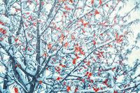 Beautiful frozen sea-buckthorn tree branch in snow storm. Nature winter background. Soft focus. Pastel toned. Holiday greeting card