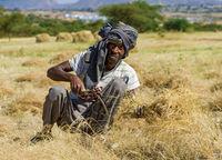 Bauer bei der Ernte von Teff (Eragrostis tef) mit der Sichel, Hawzien, Tigray, Äthiopien