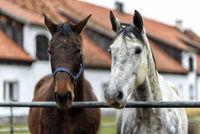 Pferde auf einer Pferdekoppel
