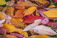Colorful autumn leaves fallen on the ground