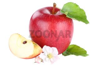 Apfel rot Blüte Frucht geschnitten Freisteller freigestellt isoliert