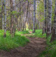 Winding Trail in Big Springs Park