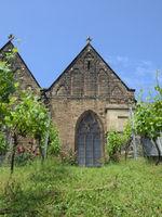Minden - Weinbau vor der St. Marien Kirche, Deutschland