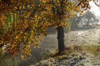 Herbst, Dinkel, Morgennebel