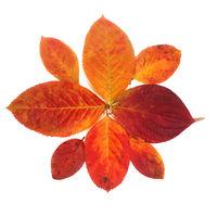 Autumn leaves on white