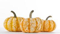 Three striped pumpkins