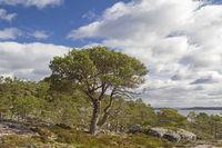 Fjelllandschaft auf der Insel Ertvagoy