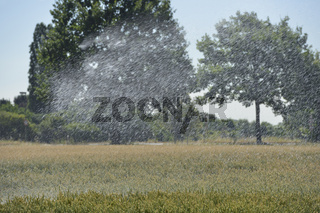 Rekordsommer 2018... Bewässerung *Weizenfeld*, Bewässerung eines Getreidefeldes im Sommer 2018