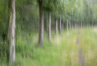 Abstract trees in a forest