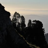 Sunset scene on Mount Niederhorn, Switzerland. Silhouettes of trees.