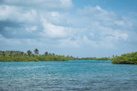 ocean / river with mangrove forest and palm tree landscape, Panama,